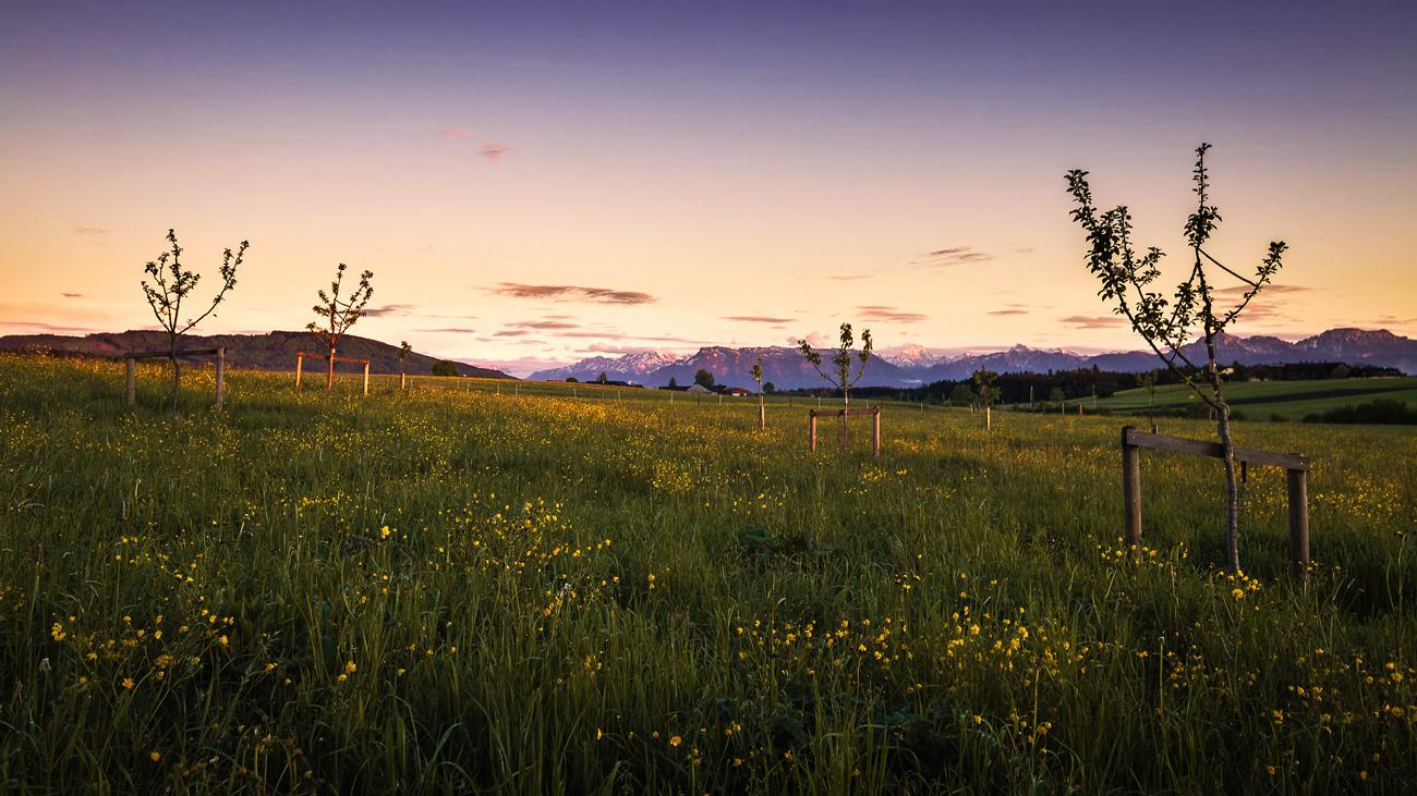 Alpen am Horizont - Sehnsucht